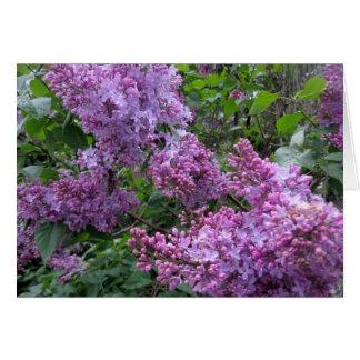 Lilacs in Farmingdale Greeting Card