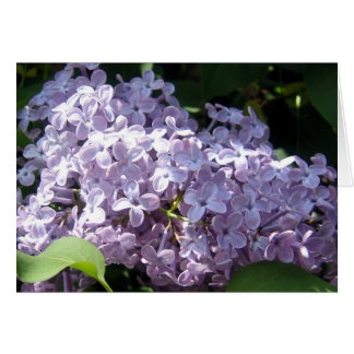 Lilacs in Full Bloom Greeting Card