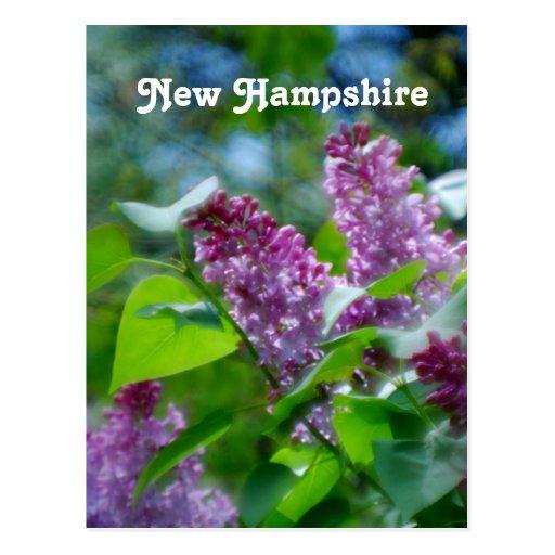 Lilacs Postcards