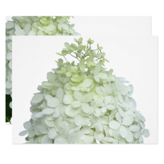 Limelight Hydrangea Bridal / Wedding Shower Card