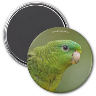 Lineolated Parakeet 7.5 Cm Round Magnet