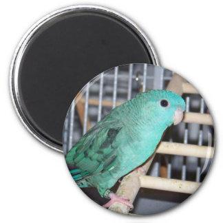 Linnie Parakeet 6 Cm Round Magnet