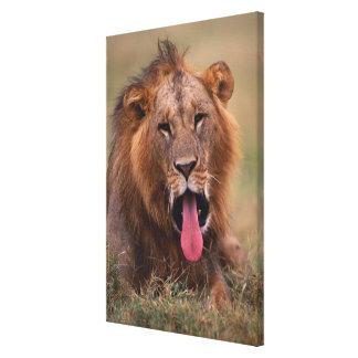 Lion 11 canvas print