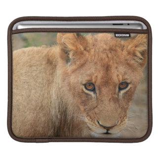 Lion Cub iPad Sleeves