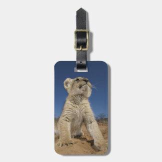 Lion Cub (Panthera Leo) sitting on sand, Namibia Bag Tag