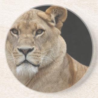 Lion Female Lying Down Sandstone Coaster