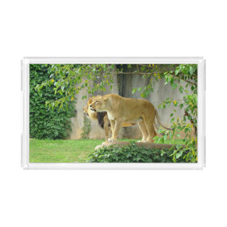Lion Lioness Acryclic Serving Tray