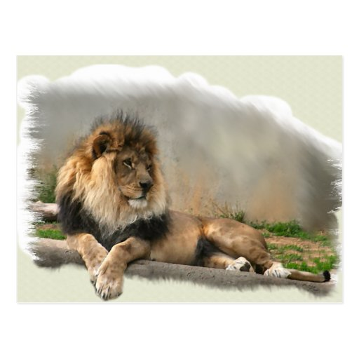 Lion Lovers Art Gifts Post Cards