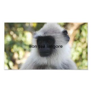 lion tail langore photo print