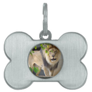 Lion Wildlife Pet Tag