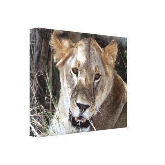 lioness face canvas