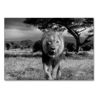Lions Wildcat Card