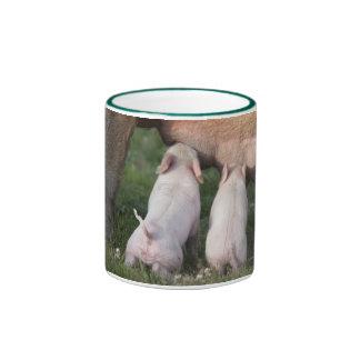 Little Baby Piglets Nursing - Cute Baby Animals Ringer Mug