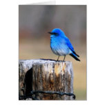 Little Blue Bird of Happiness greeting card