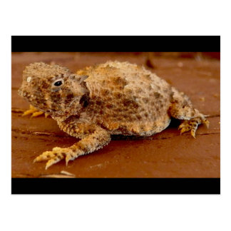 Little Squirt...horned toad... Postcard