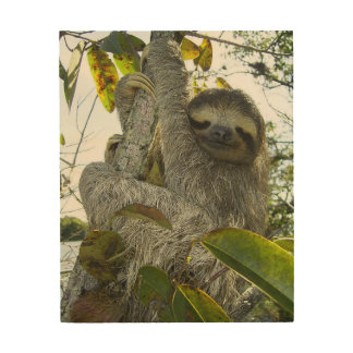 Live Life Like a Sloth Wood Print