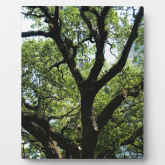 Live Oak In Downtown Savannah Plaque