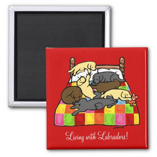 Living with Labradors Cartoon Magnets