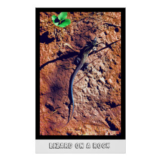 Lizard On A Rock Poster