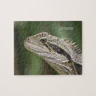 Lizard puzzle