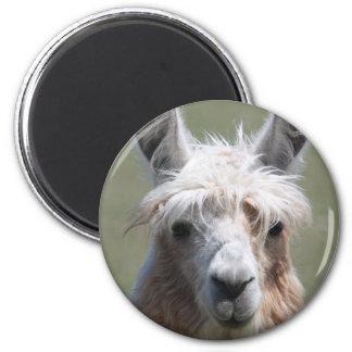Llama Refrigerator Magnets