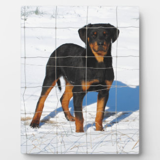 Lobo Rottweiler Plaque