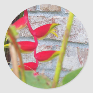 Lobster Claw Flower Heliconia Rostrata Classic Round Sticker