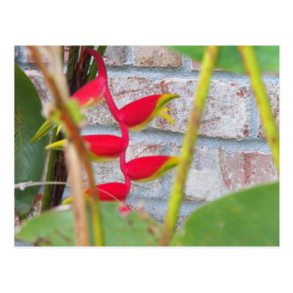 Lobster Claw Flower Heliconia Rostrata Postcard
