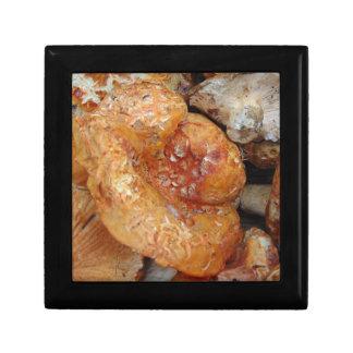 Lobster Mushrooms Gift Box
