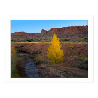 """Lone Cottonwood"" Postcard"
