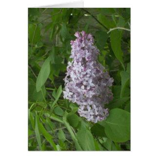 lone Lilac Card