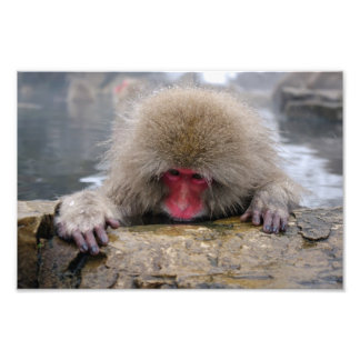 Lonely snow monkey in Nagano, Japan Art Photo