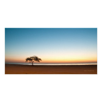 Lonely tree at sunrise in Kuwait Card
