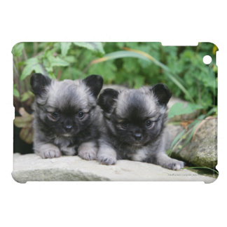 Long Haired Chihuahua Puppies iPad Mini Covers