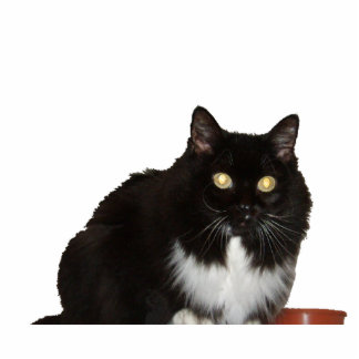 Long Haired Pet Cat Standing Photo Sculpture