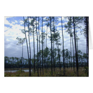 Long Pine Key, Florida Everglades, 1999 Card