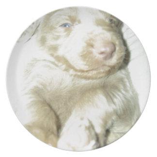 Longhaired Pup Weimaraner Plate