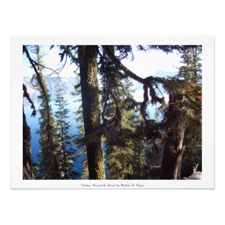 """Looking Through the Forest"" Crater Lake Art Photo"