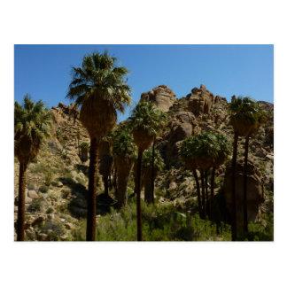 Lost Palms Oasis I at Joshua Tree National Park Postcard