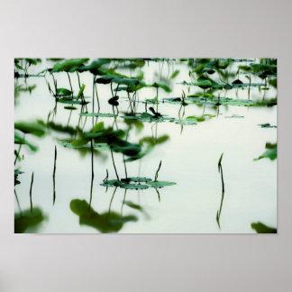 Lotus Fairyland Photographic Art -6 Poster