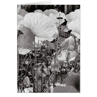 Lotus pond, Black and White Photography Card