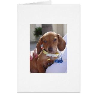 Louis 051 card