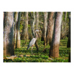 Louisiana Bird in Swamp Print