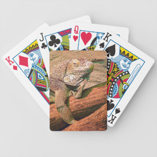 Loungin' Lizard Poker Deck