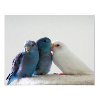 Love Birds Pacific Parrotlet bird friends photo