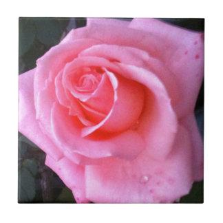 Love Pink Romantic Rose Closeup Ceramic Tile