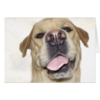 Love you too - goofy Labrador portrait Greeting Card