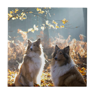 Lovely Collie Dog Tile