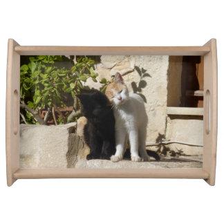 Lovely cuddling white orange and black kittens serving platter