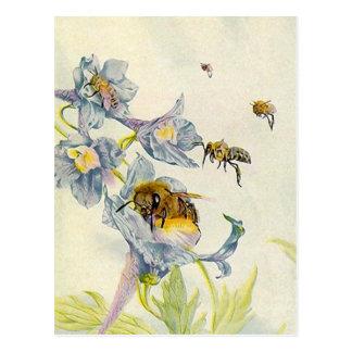 LOVELY HONEYBEES NATURE BEEKEEPERS HONEY POSTCARDS